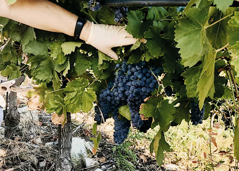 Yeasts and Terroir: where Biodiversity meets science