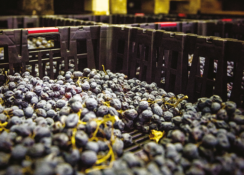 It's appassimento time! How Amarone della Valpolicella is born.