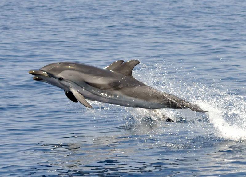 La cantina San Giorgio sostiene la Jonian Dolphin Conservation